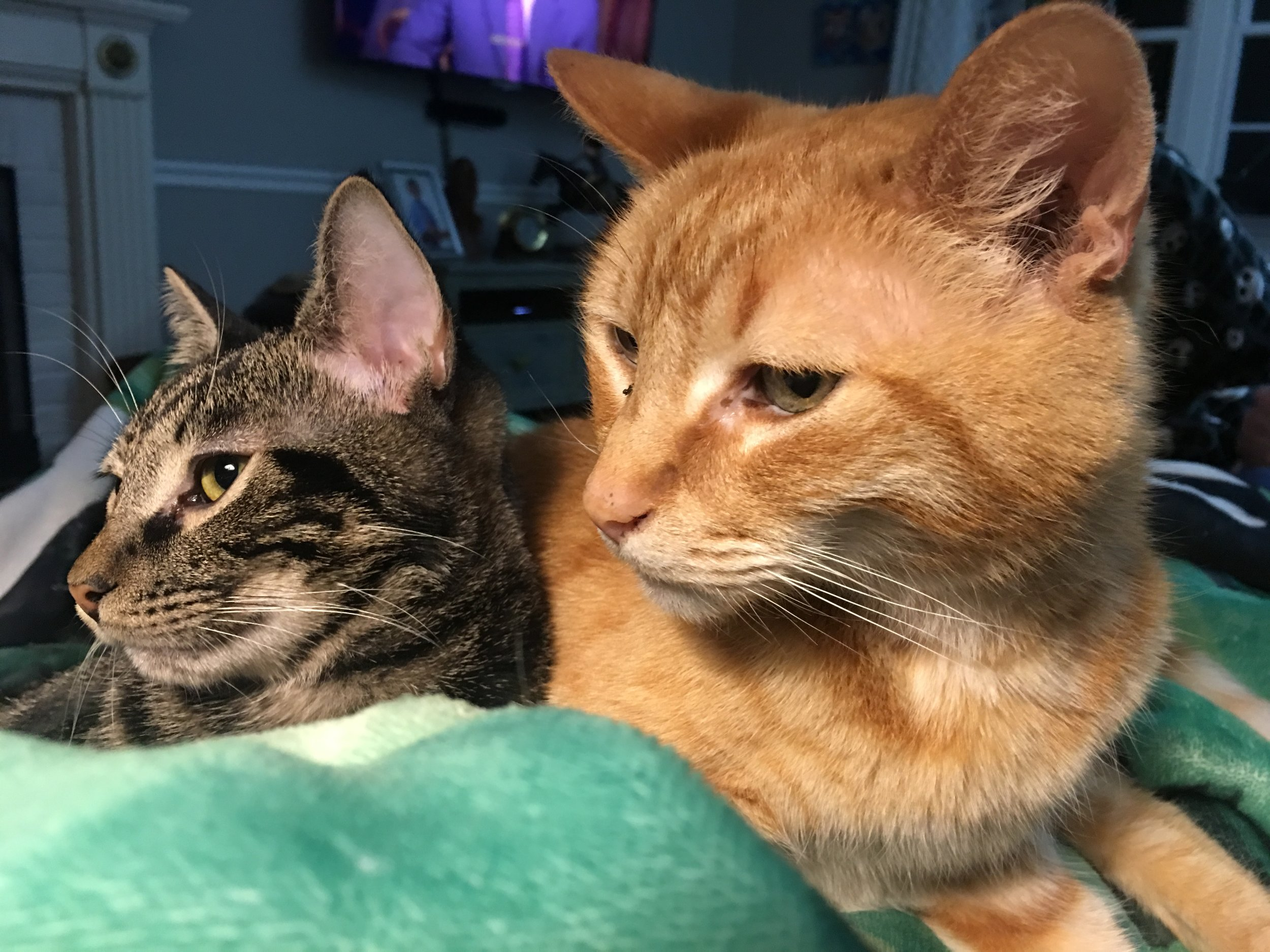 These two say that they appreciate the lack of stink in their home. They also say that they work hard at making stink, on a regular basis.