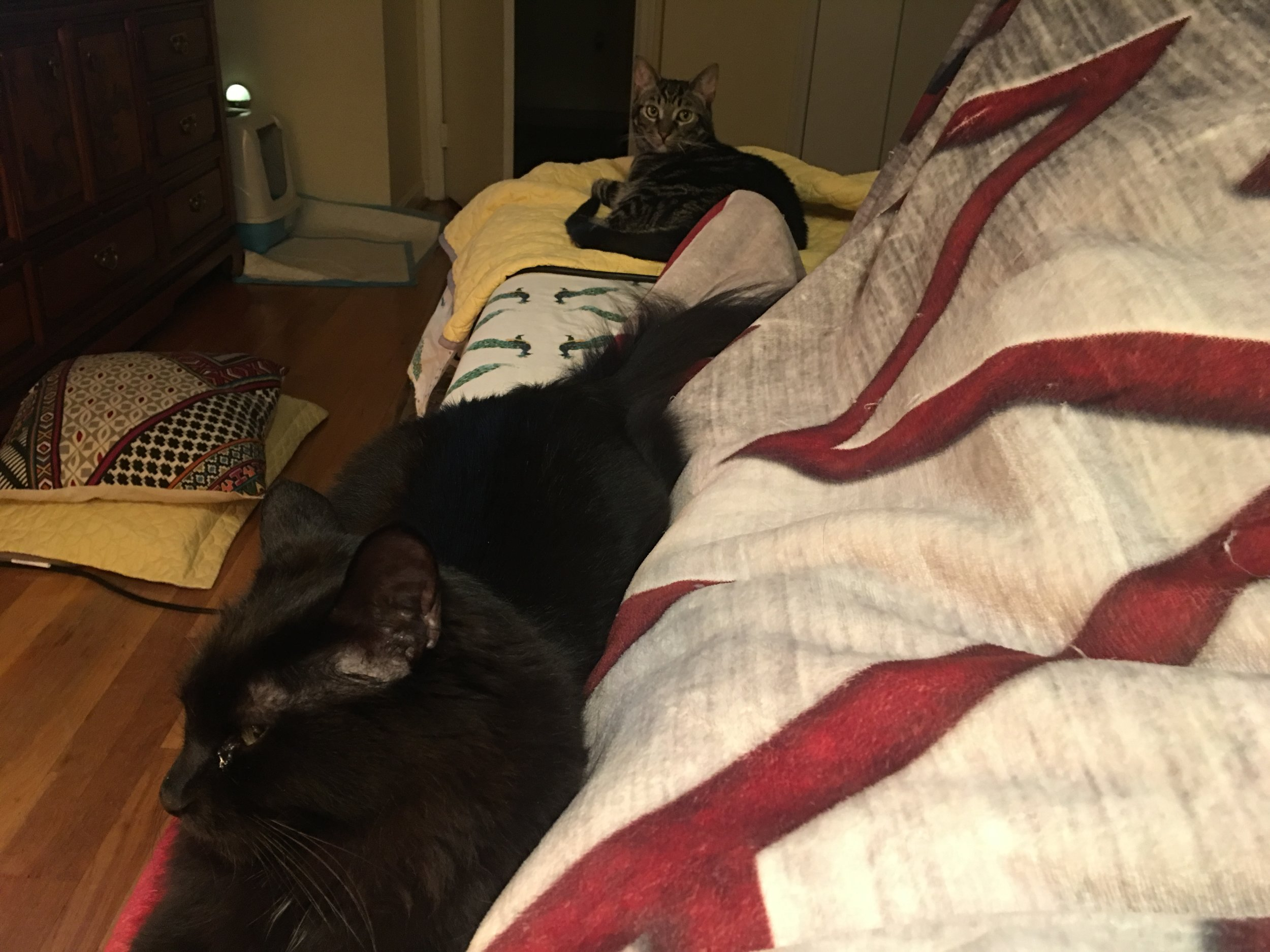 More of my nursing care buddies. I love that they choose to lay in the smallest spot possible, just to lay near me. They keep getting pushed off my lap, because they can't lay on my knee, but they want to be near. They are so sweet that I can't stop giving them too many treats. I'm not sure which they love more, me or the treats; but, I don't want to pull too much at that thread.