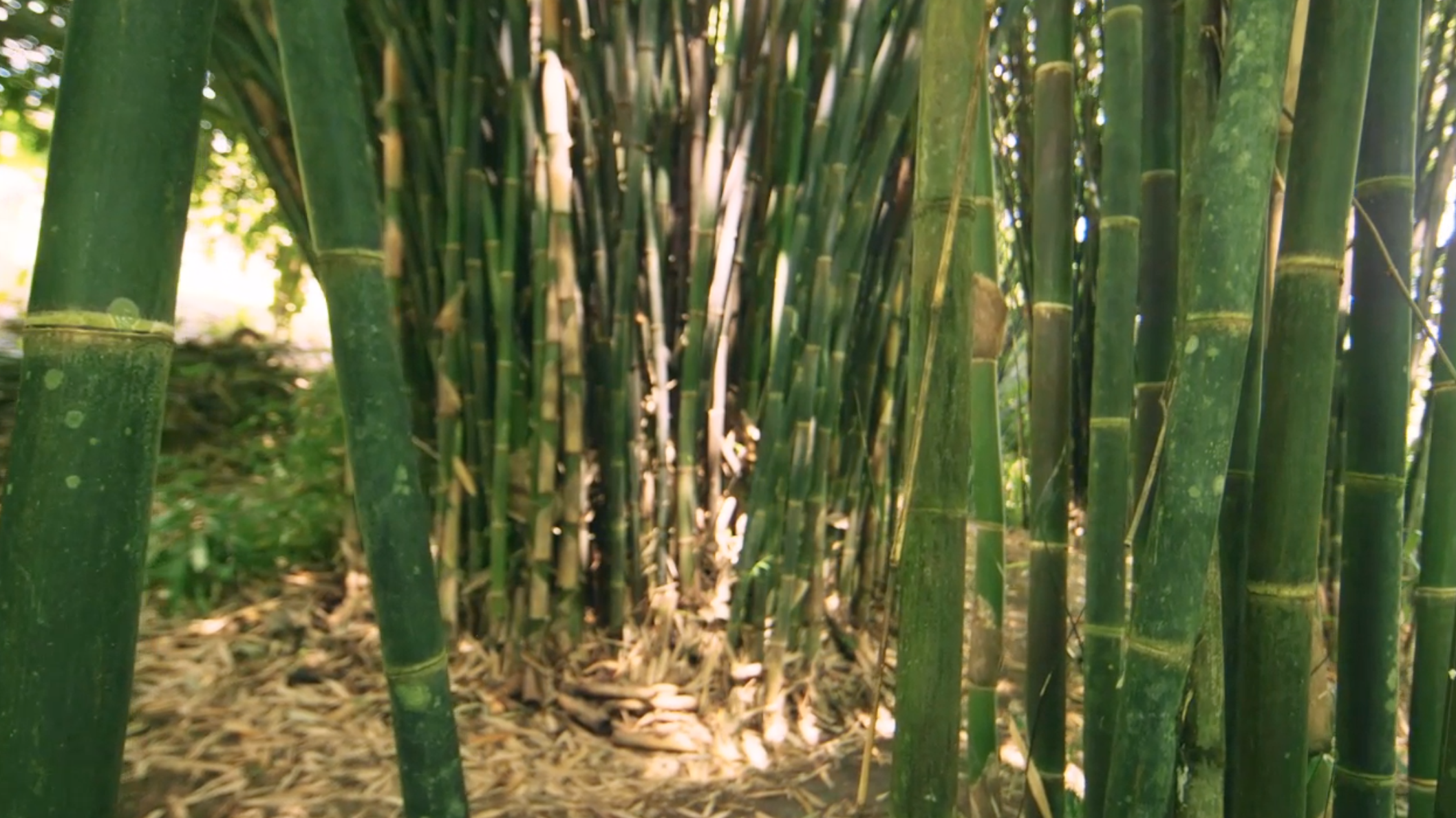 The Timber of the 21st Century<br><em>EcoPlanet Bamboo</em>