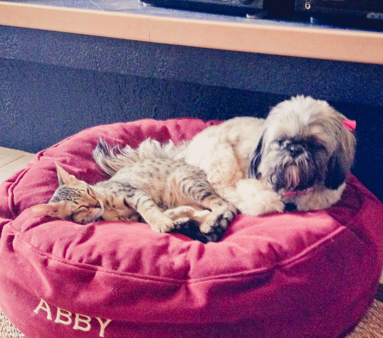 Quincy and Abby - Mary Mallett edt.jpg