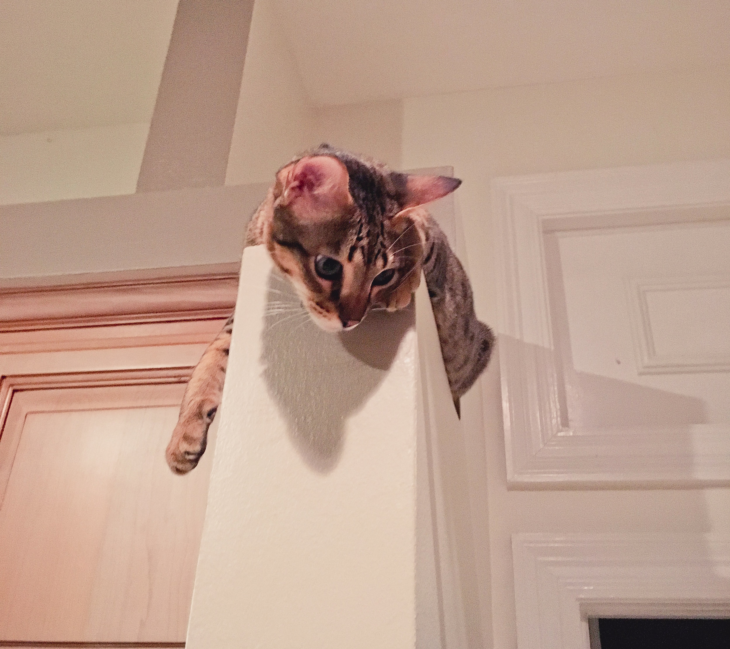 Quincy Loves High Places  - Mary Mallett edt.jpg