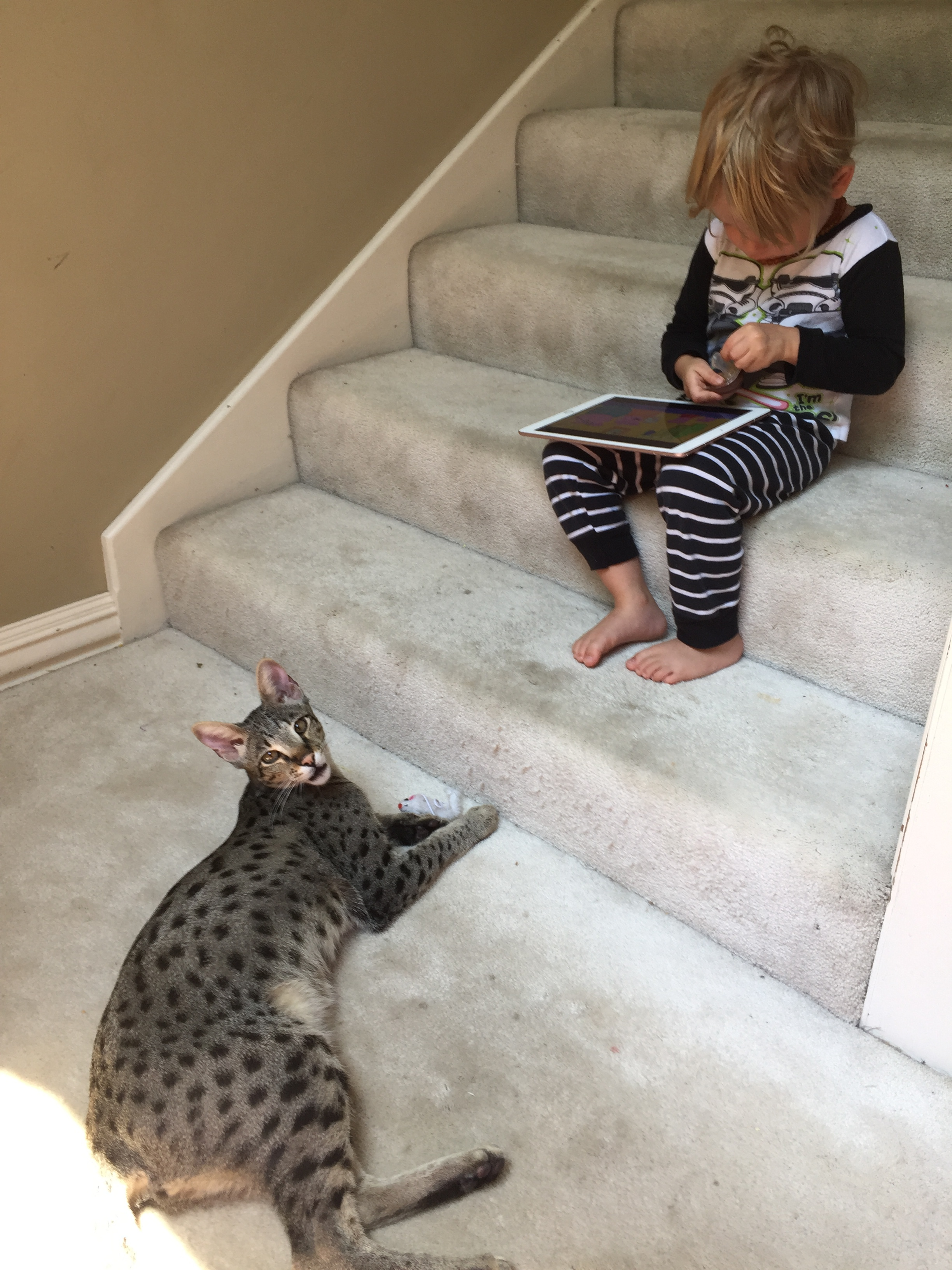 Lukas the F2 savannah is watching little brother work on his iPad