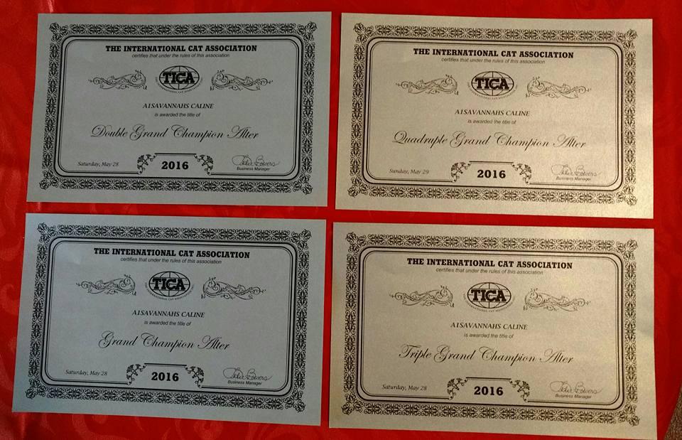 A1 Savannahs Caline Awards