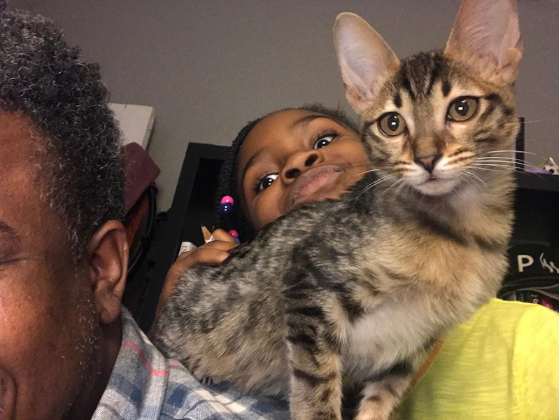 A1Savannahs Alec F5 Male Savannah Kitten