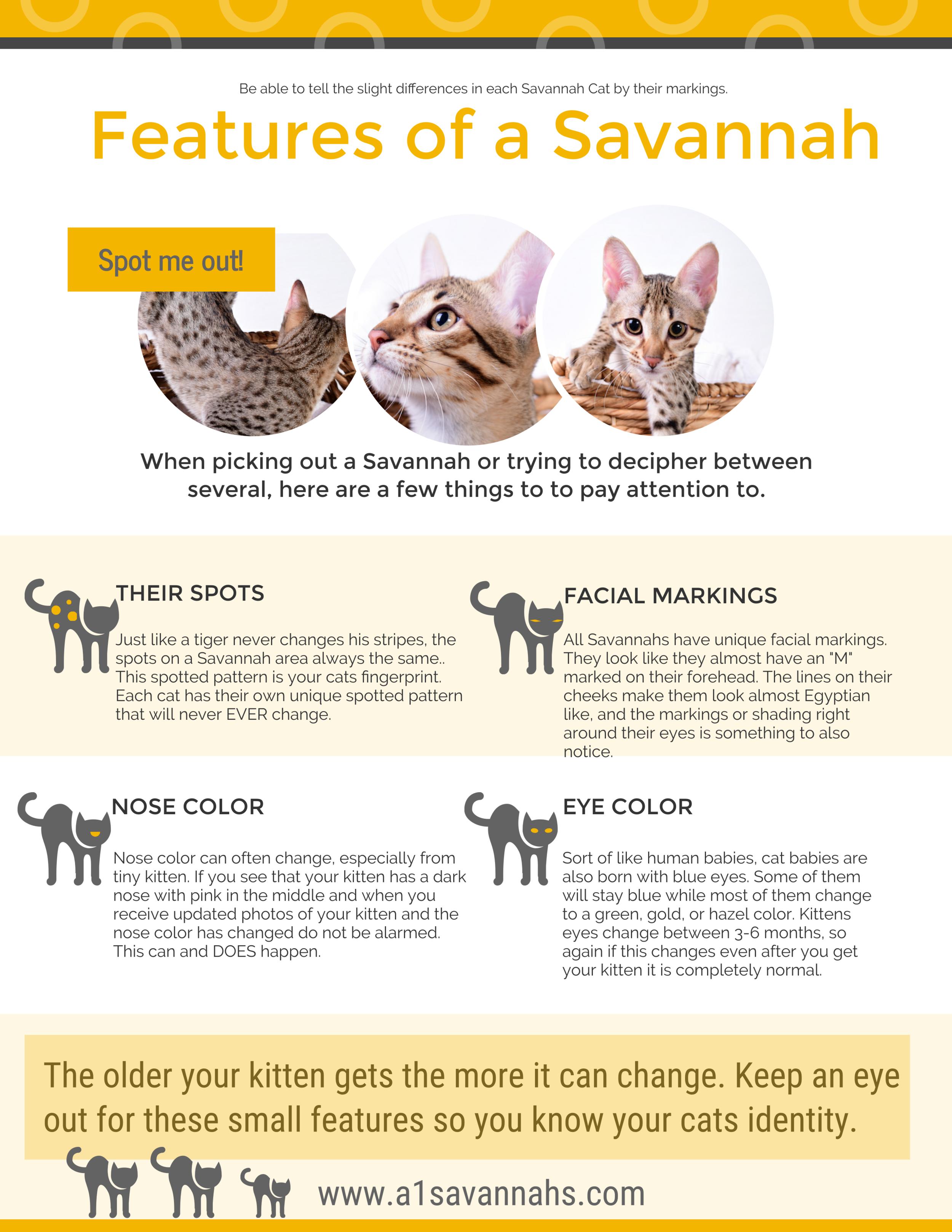 A1 Savannahs features of a savannah info-graph