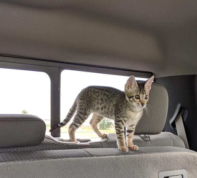 backseatdriver.jpg