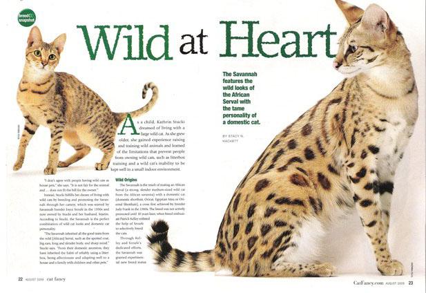 2009 Cat Fancy article about A1Savannahs