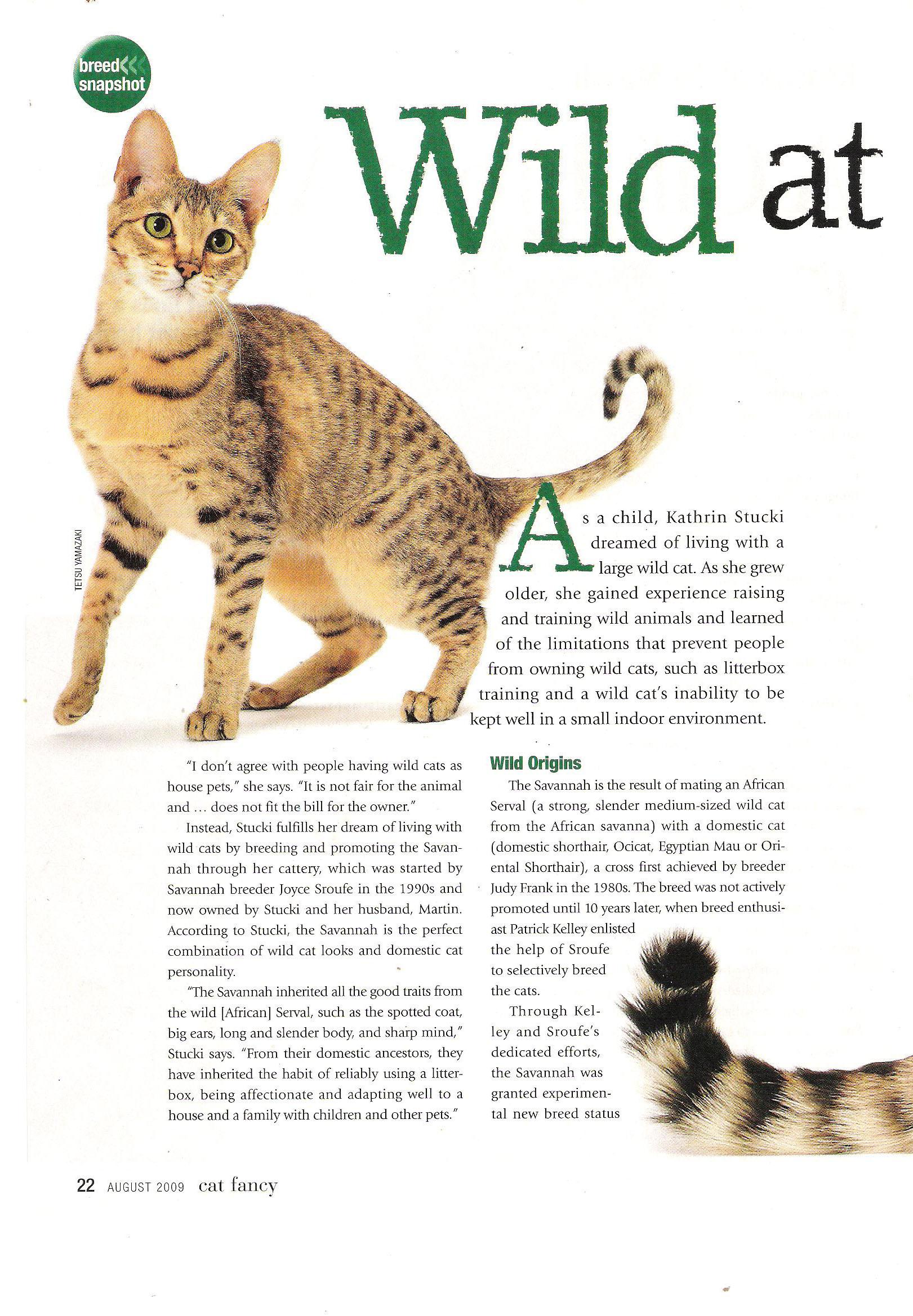 2009 Cat Fancy article about A1Savannahs page 1
