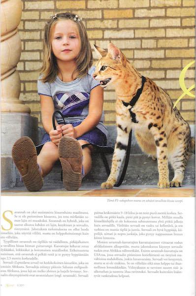 March 2010 - Kissa Magazine about A1Savannahs page 1