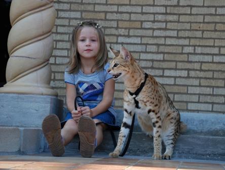 A1Savannahs f1 Scarlett's Magic sitting at Martland Mansion with a young girl