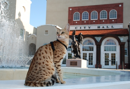 A1Savannahs F1 Scarlett's Magic sitting at water fountain at Ponca City's City Hall