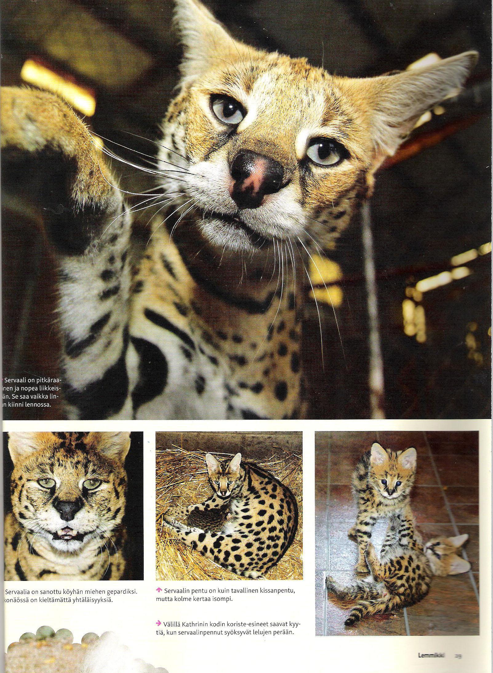 Lemmikki Magazine about A1Savannahs