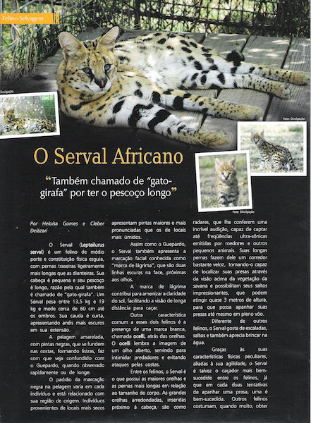 Pulo do Gato Edition 34 about A1Savannahs