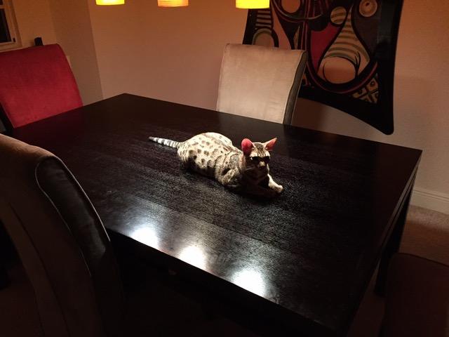 F5 Loki resting on a table