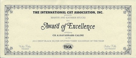 2013 TICA award