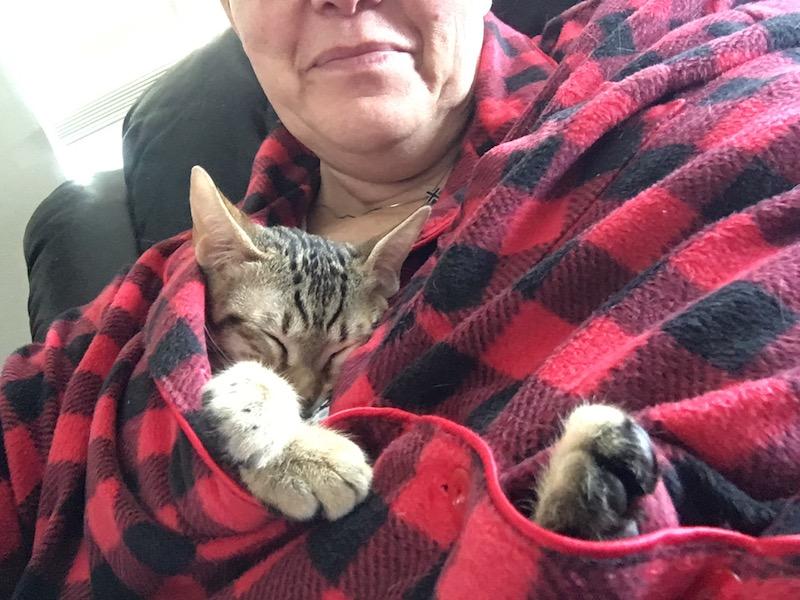 A1Savannahs SBT Maggie is hiding in moms robe sleeping