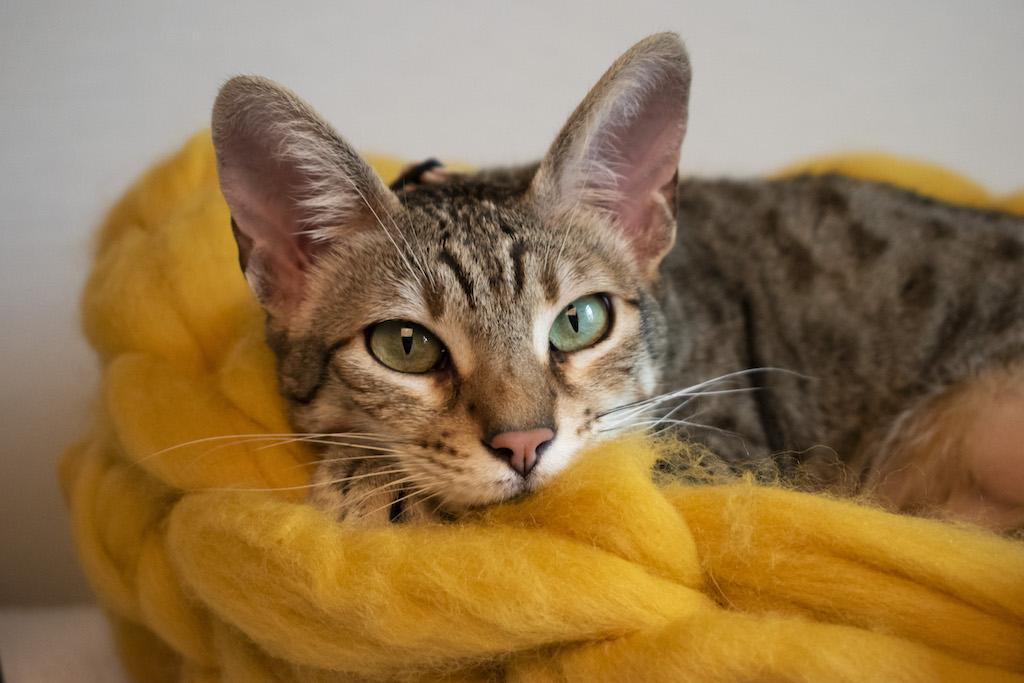 Mustard Merino Wool Cat Bed