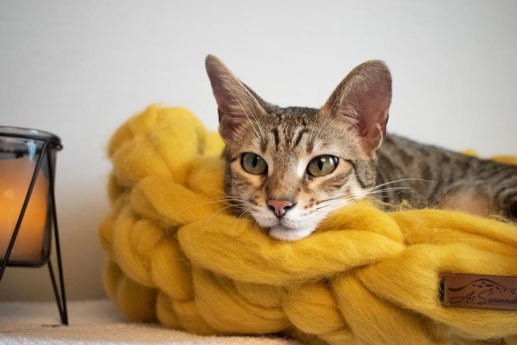 Merino Wool Cat Bed - Amber