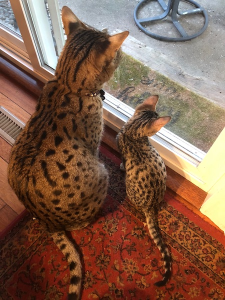 F6 Lex and F2 Loki are Bird watching from the backdoor