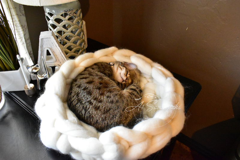 A1Savannahs F4 Cleo napping in her Merino Wool Cat bed