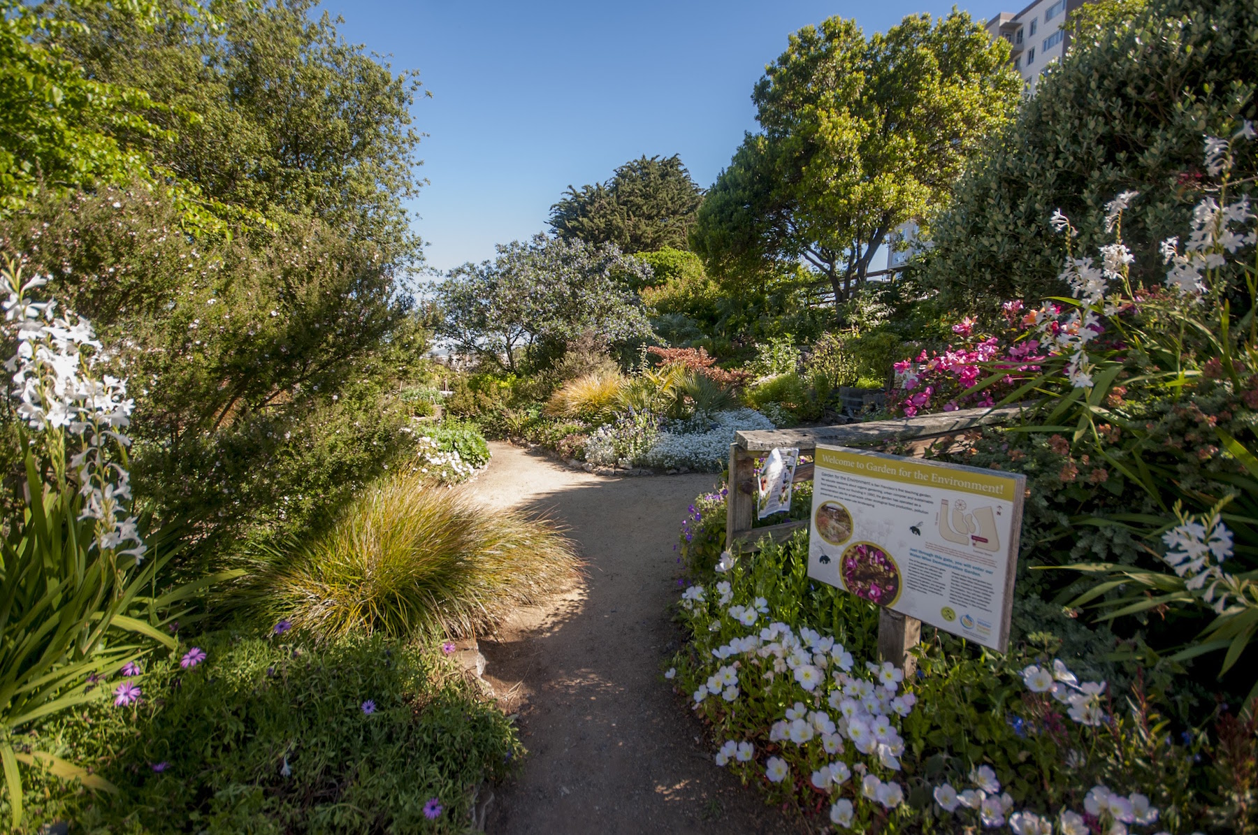 Garden for the environment,  looking north , 2017