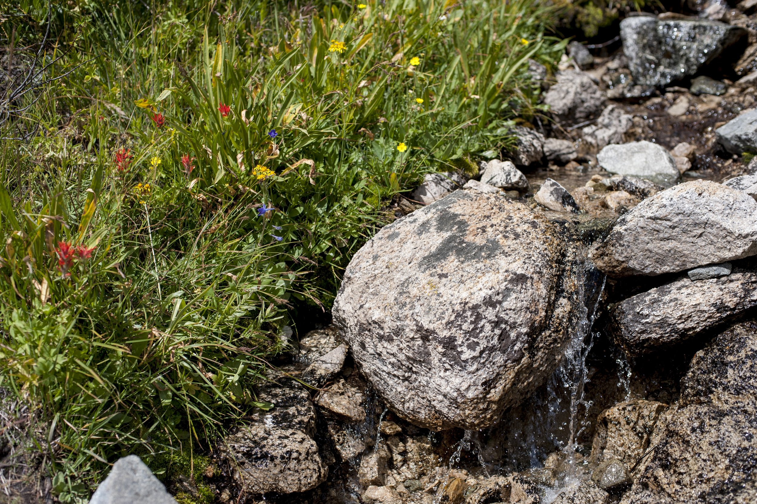 Creekside meadow in the Sierras.