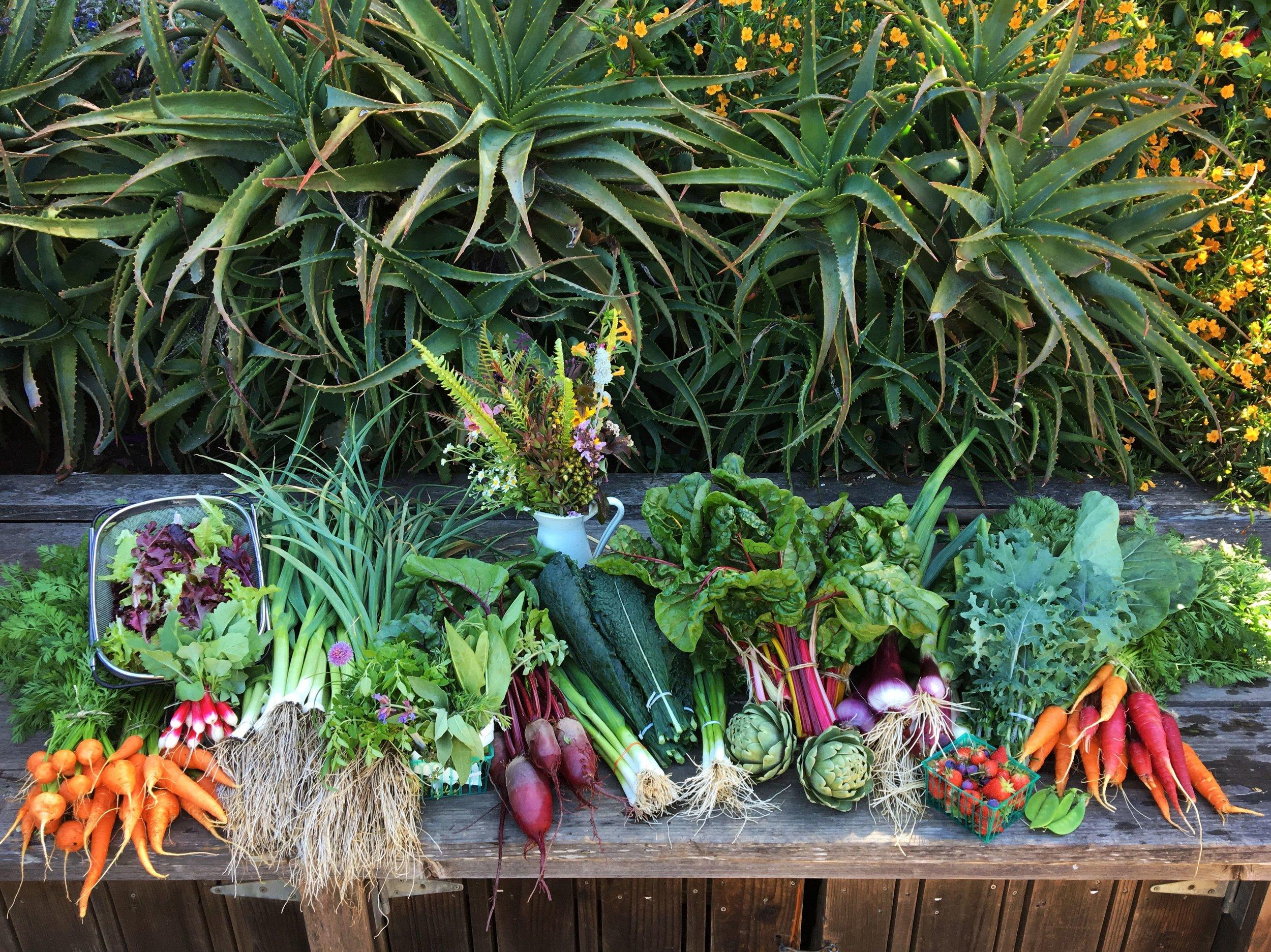 A full summer harvest at GFE.