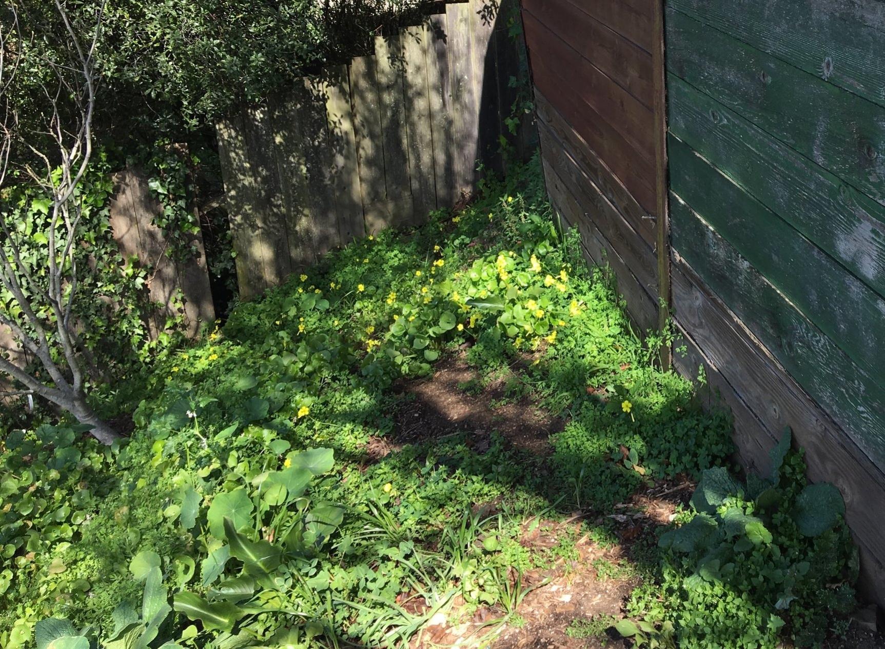 Weeds galore.