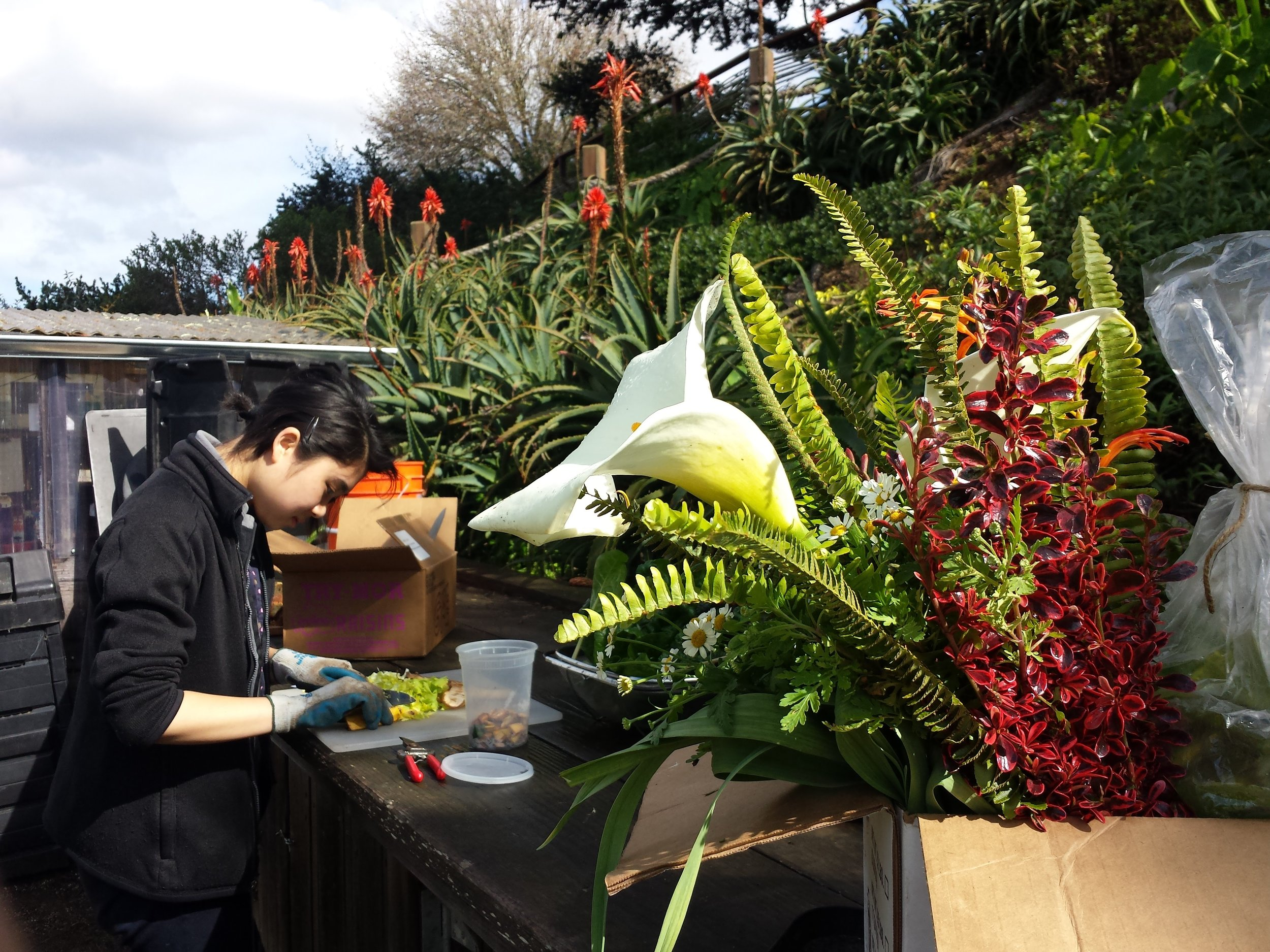 A bouquet of ferns,  Coprosma , and and early spring calla lily ready to go in the harvest box.