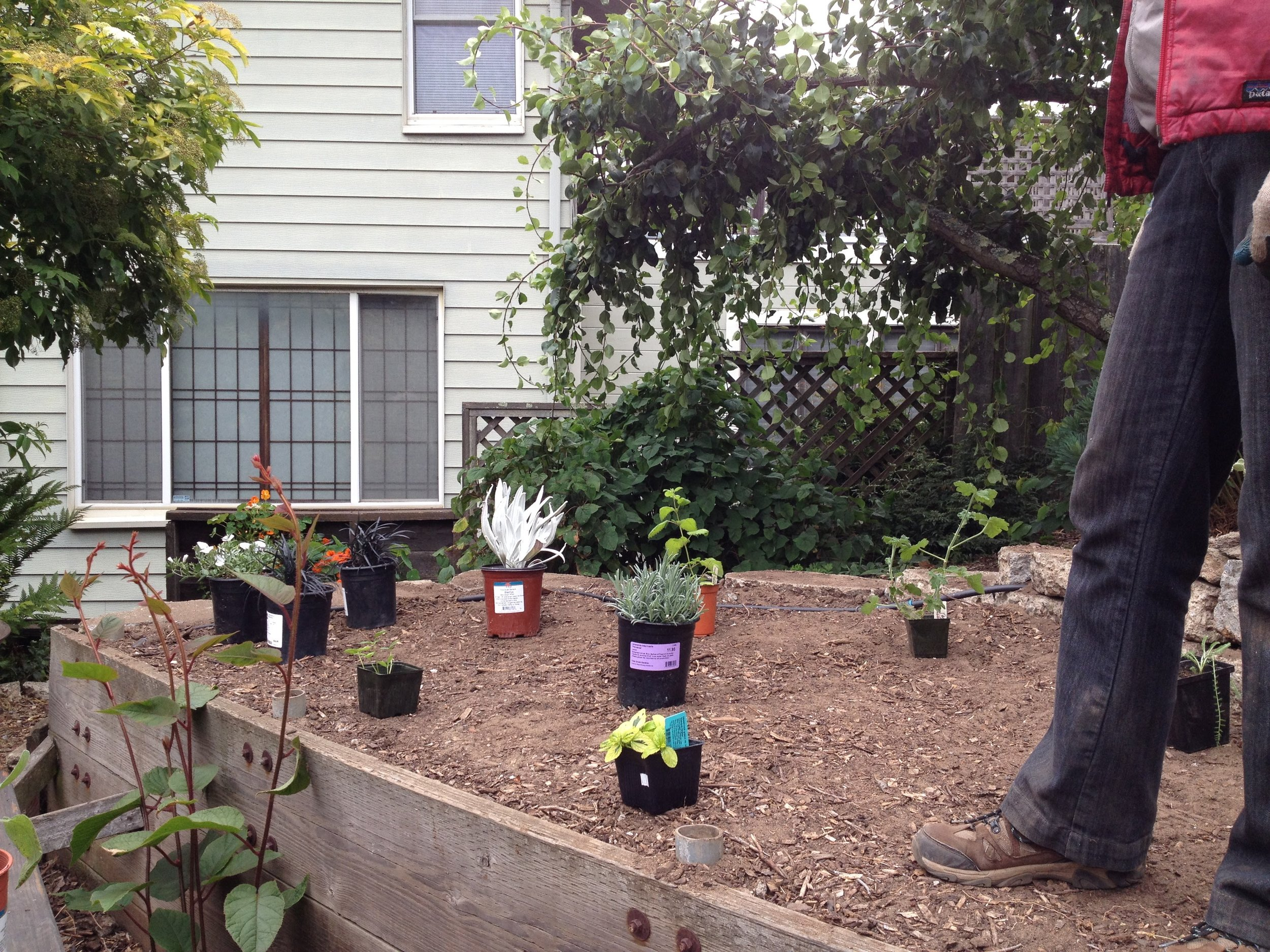 Take advantage of the break in the drought to establish a new drought-tolerant garden.