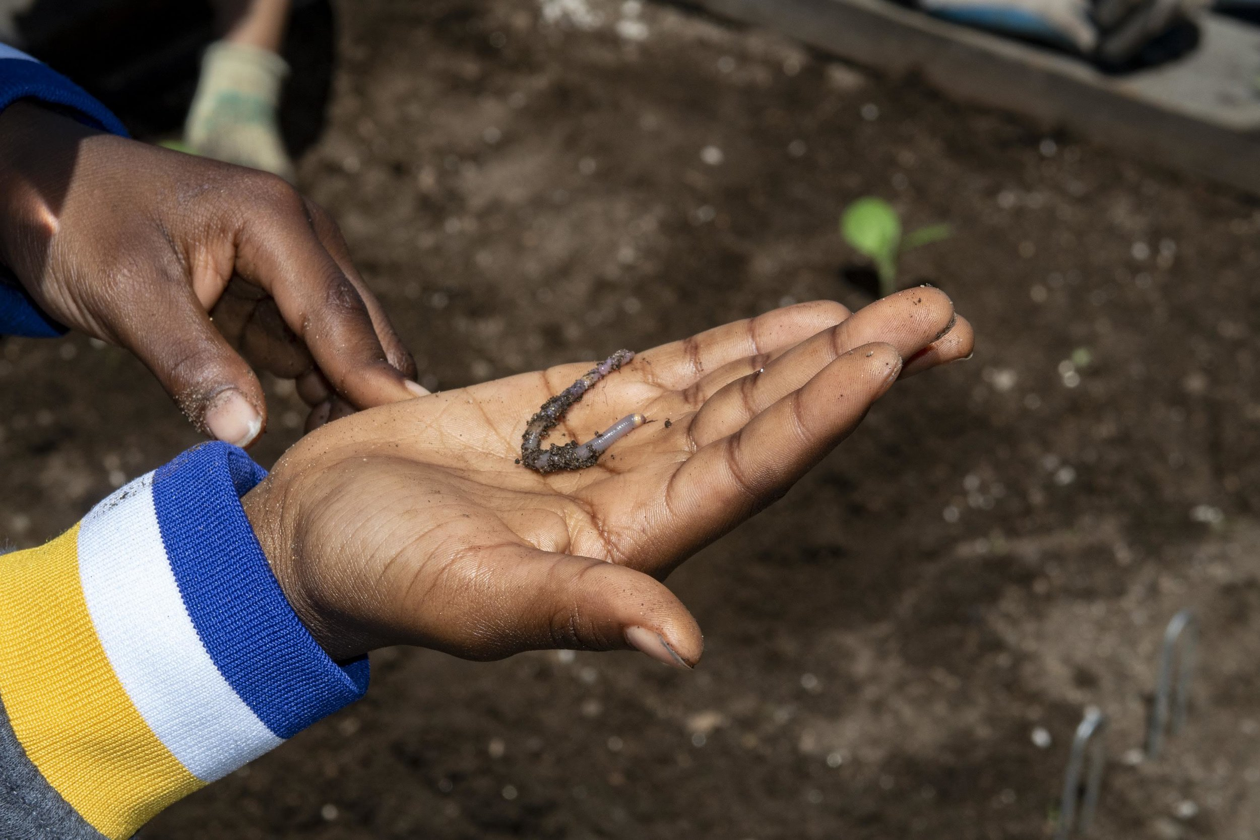 Planting a seedling and holding a worm can give kids the connection they need to value our environment.