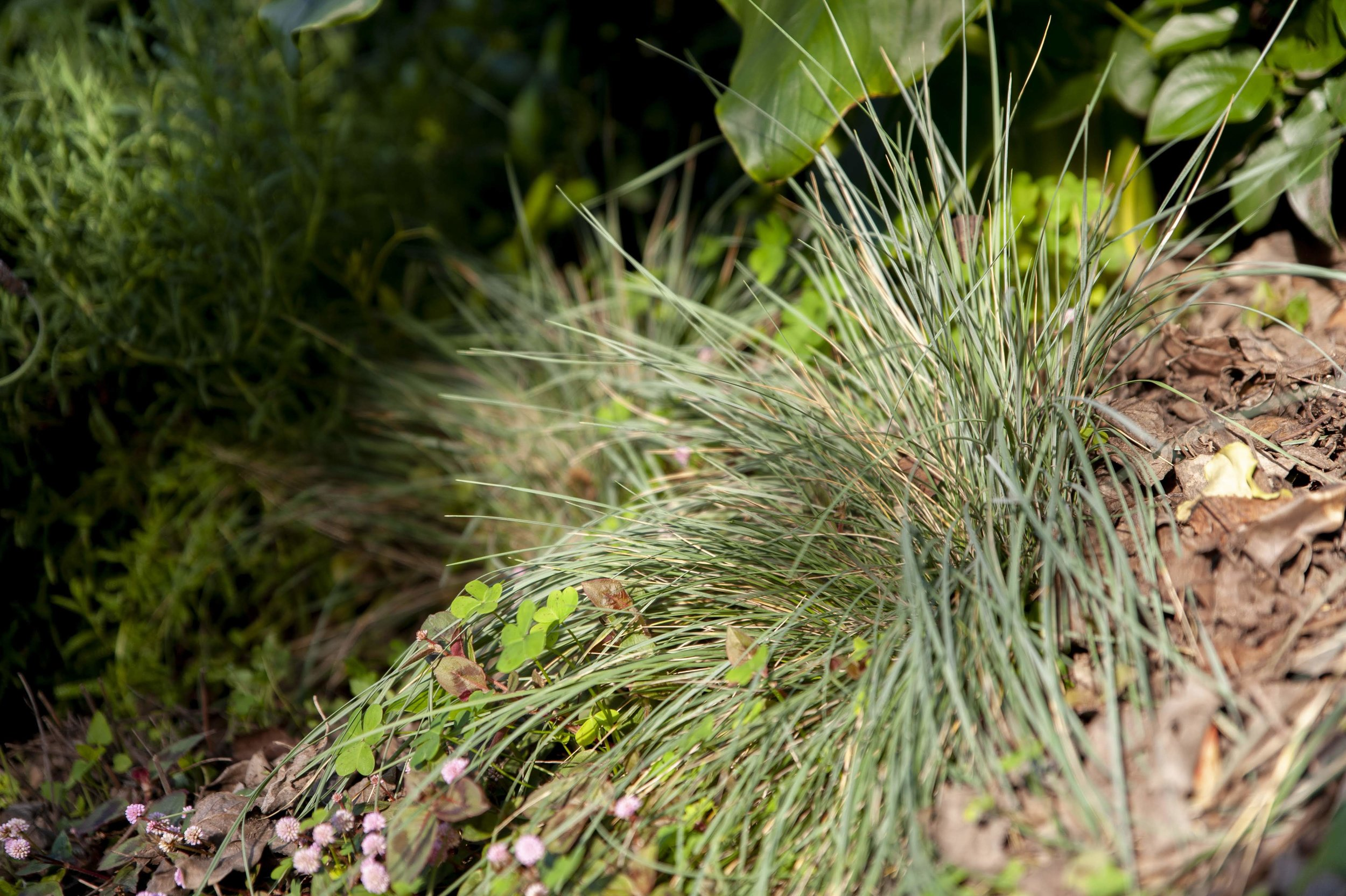 A small grass clump will need space to grow.