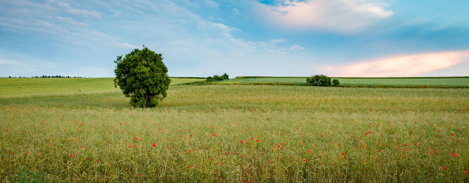 Rural Germany-9399.jpg