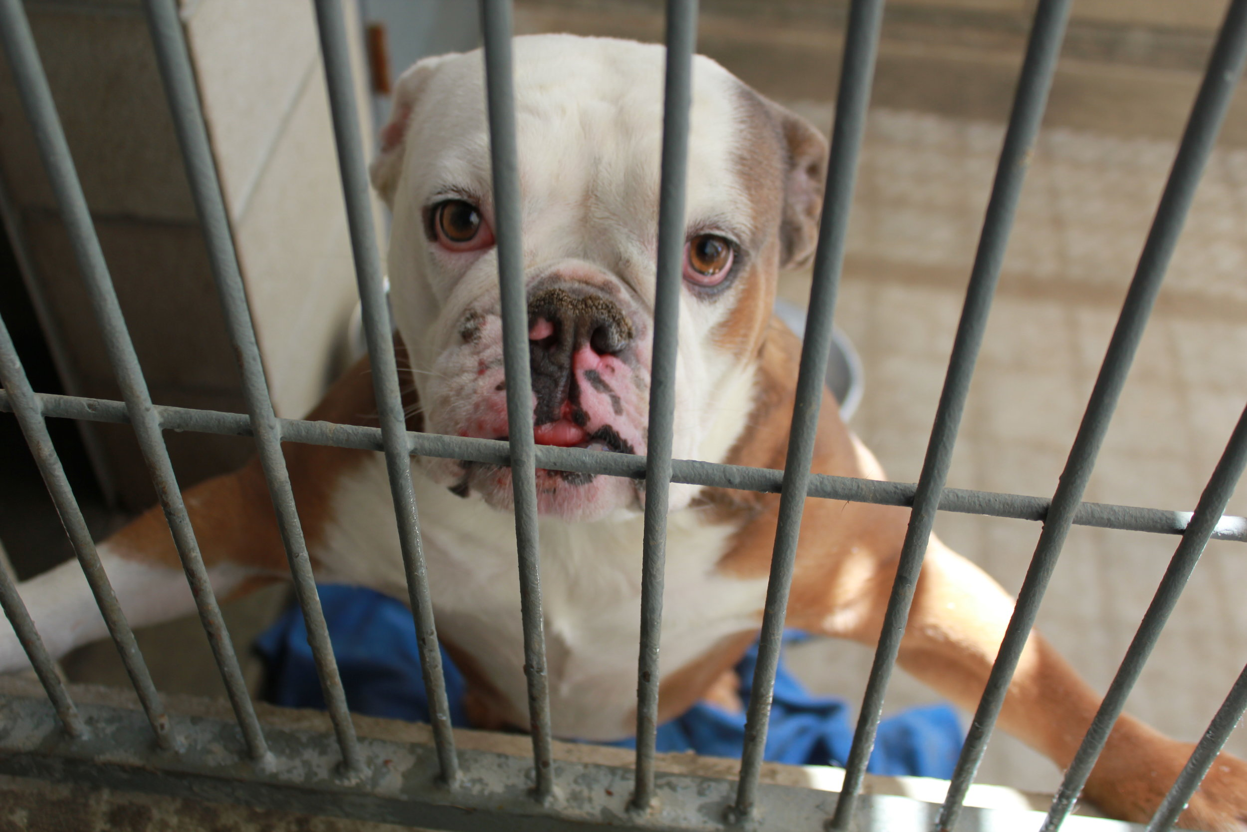 Help dog's like Tyson leave the shelter for good and escape death row.