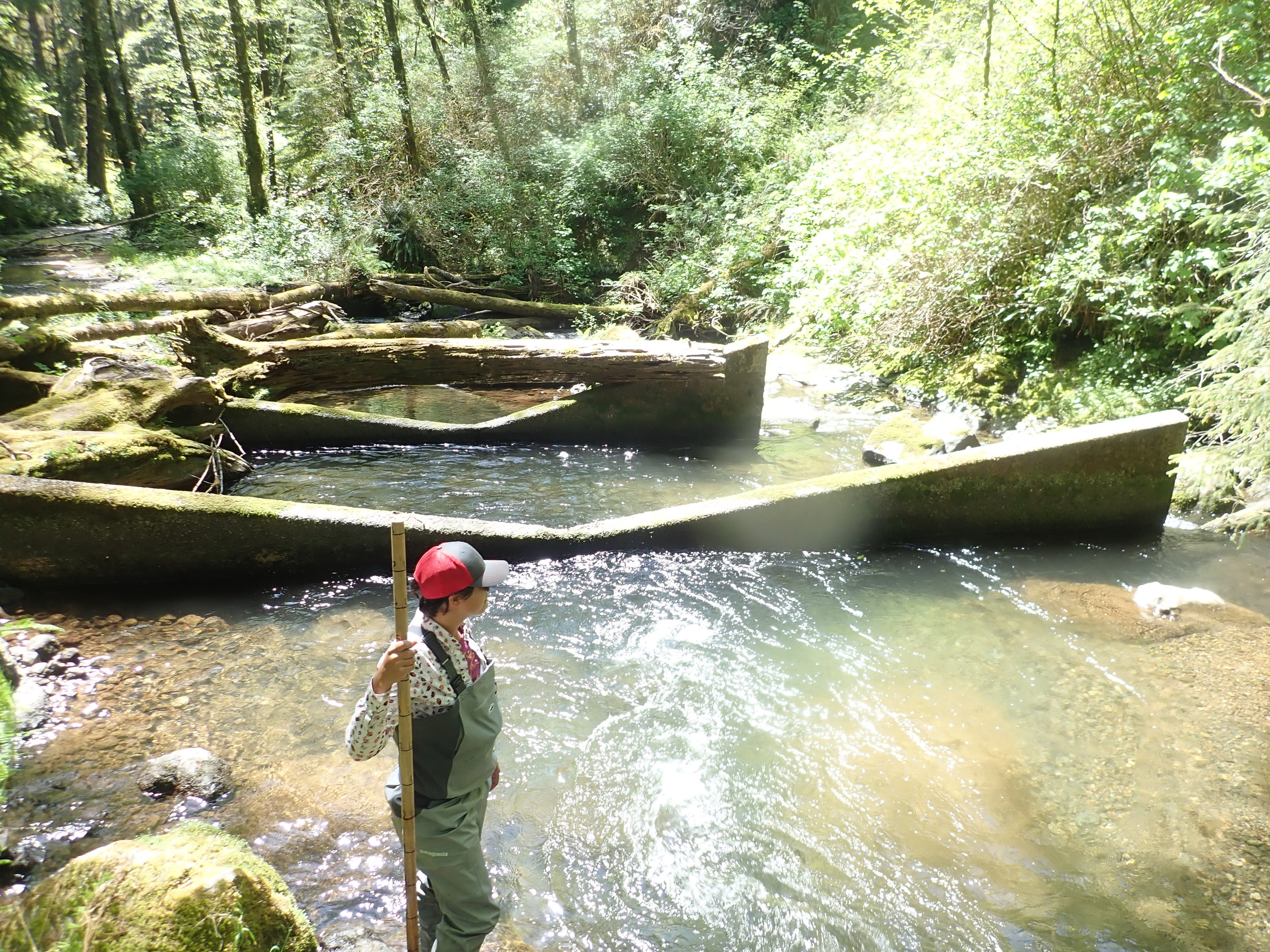 USFS Hydrologist Leah Tai stands next to the concrete weirs constructed below the undersized culvert, which are also set to be removed.