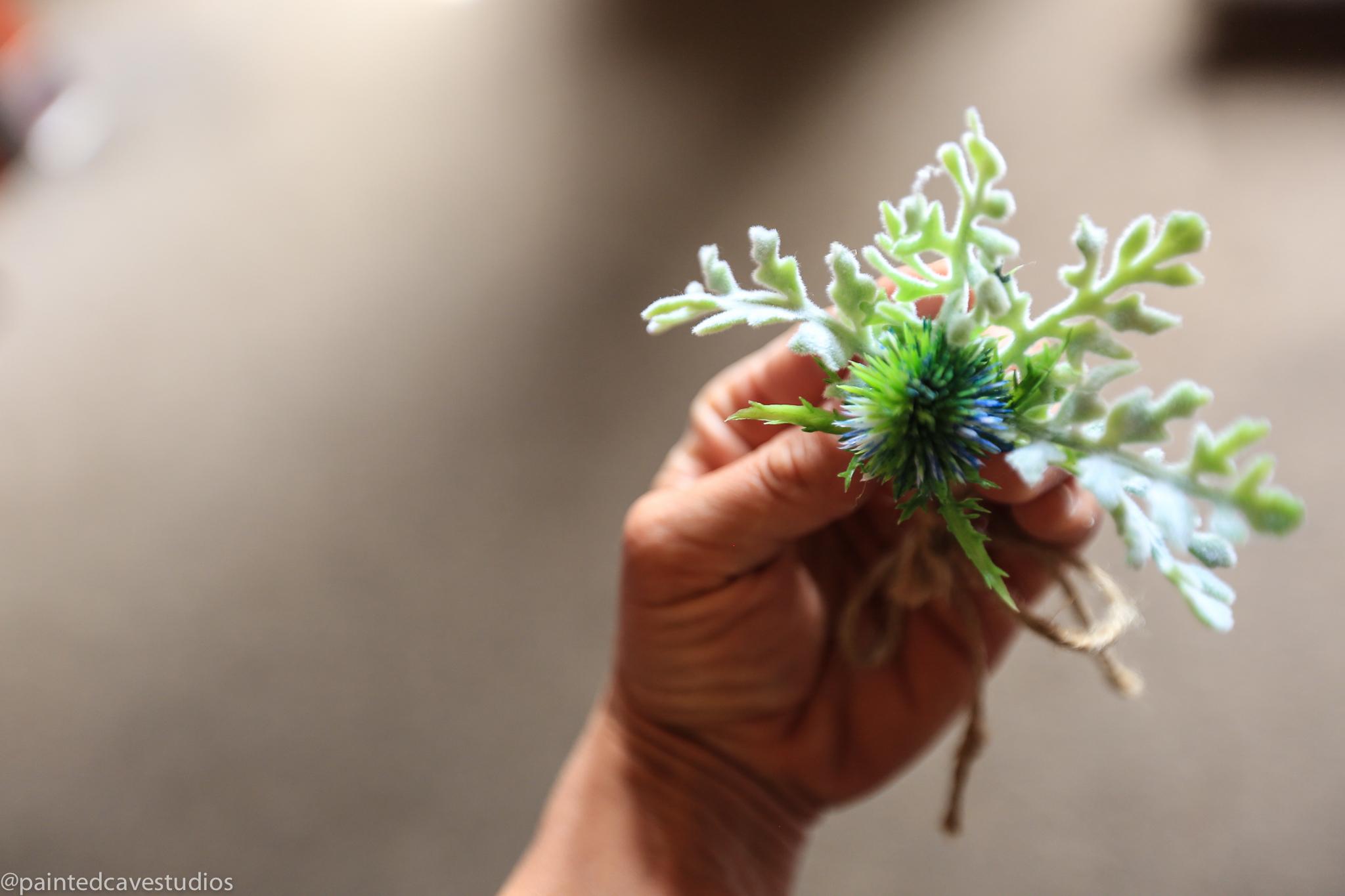 cassandra chadwick-38.jpg