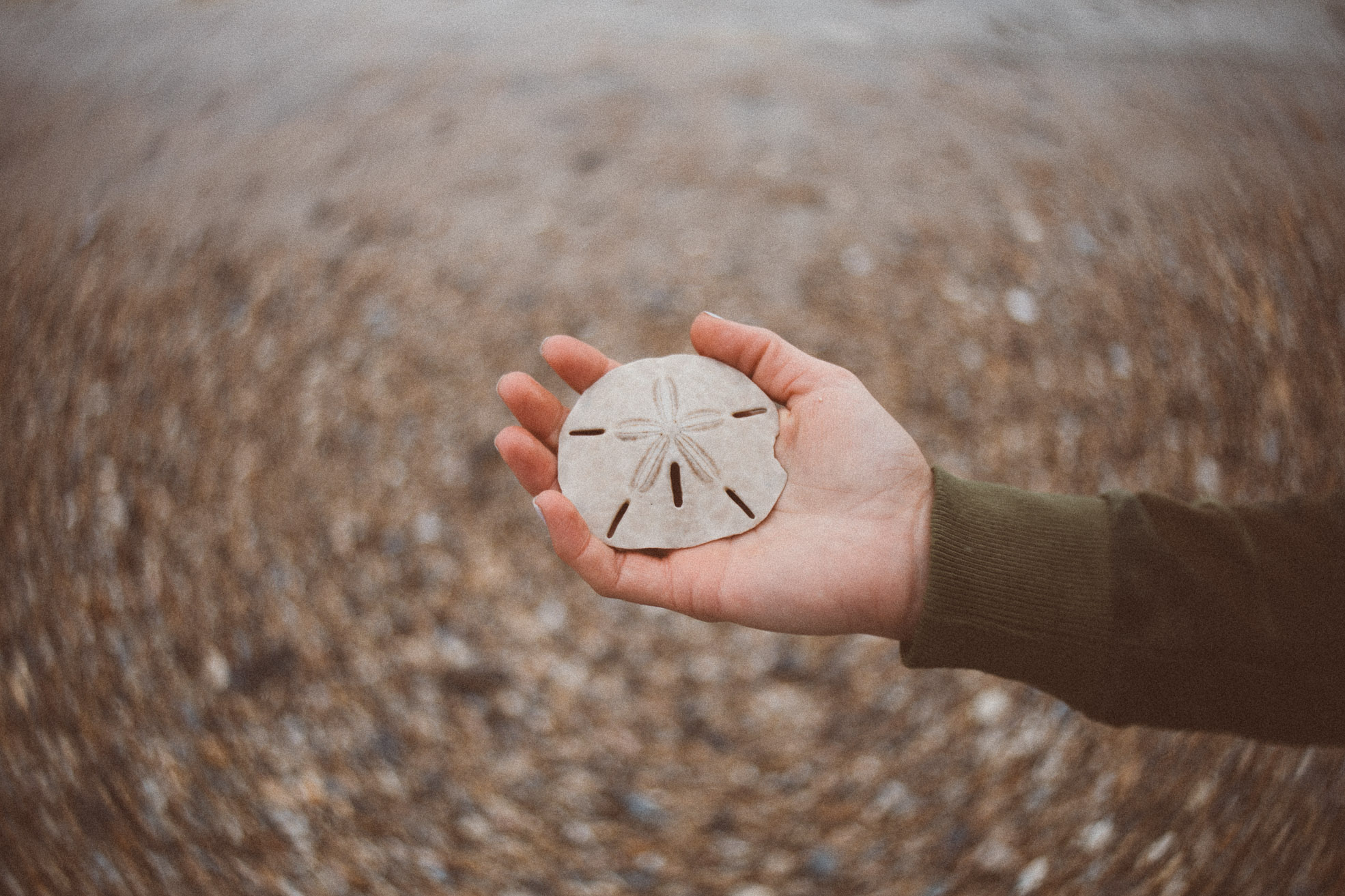 A random stranger showing me a sand dollar she found that morning taken with Lensbaby Burnside 35. I love the circular bokeh and how it helps to separate the main subject from the background.