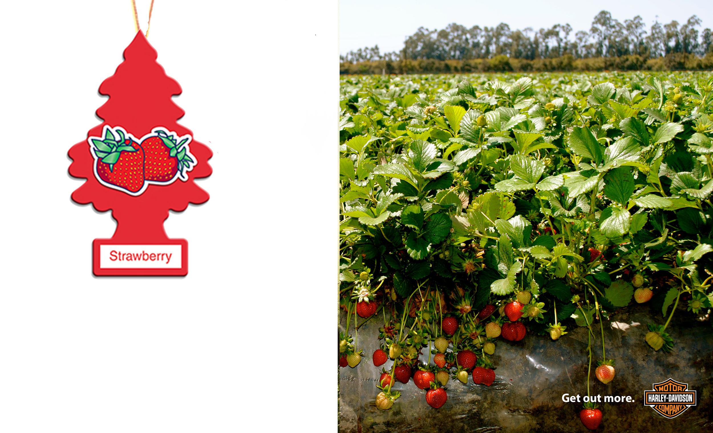 harley-getoutmore-strawberry.jpg