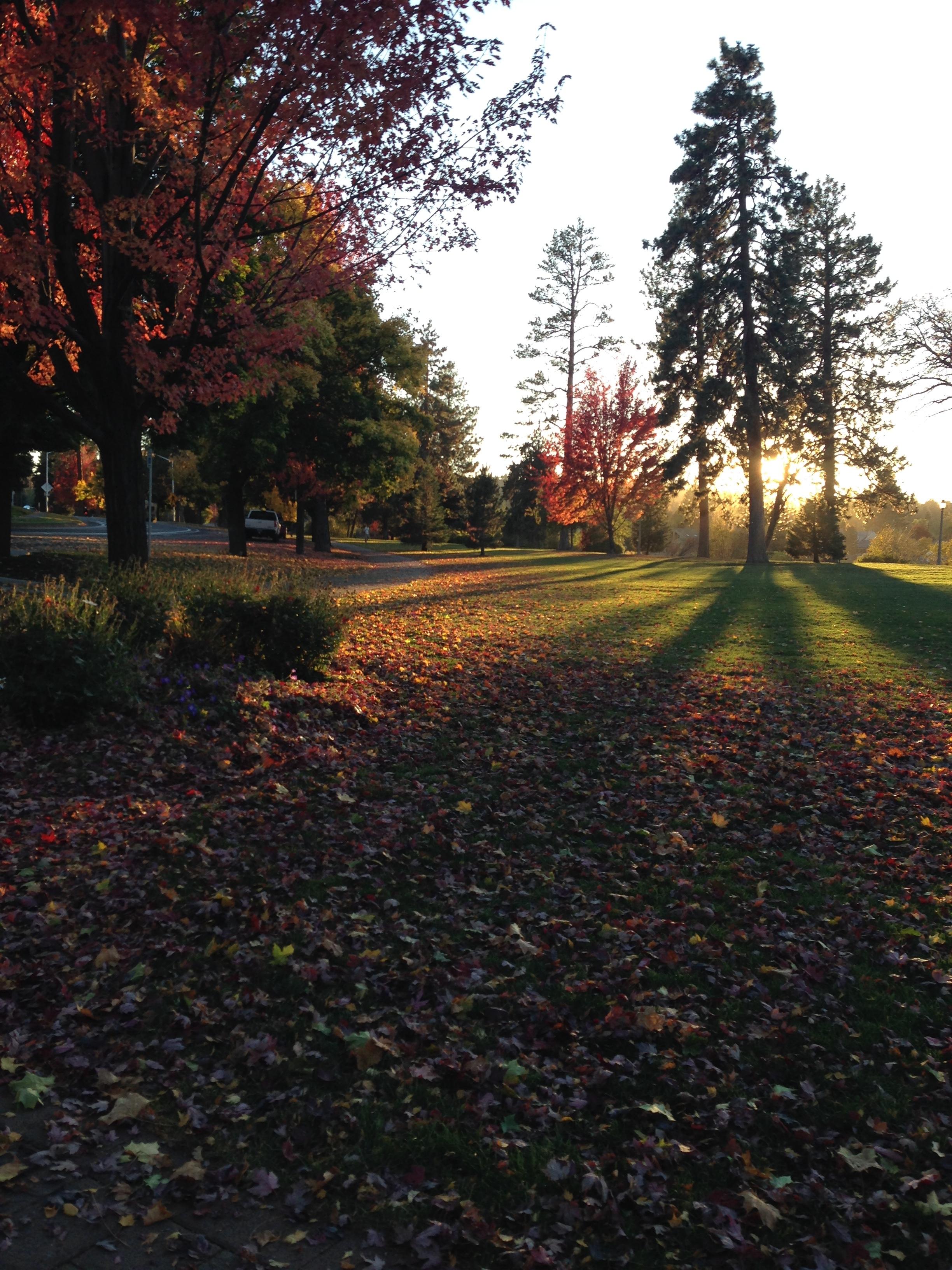 Fall Leaves in Drake Park Bend, Oregon