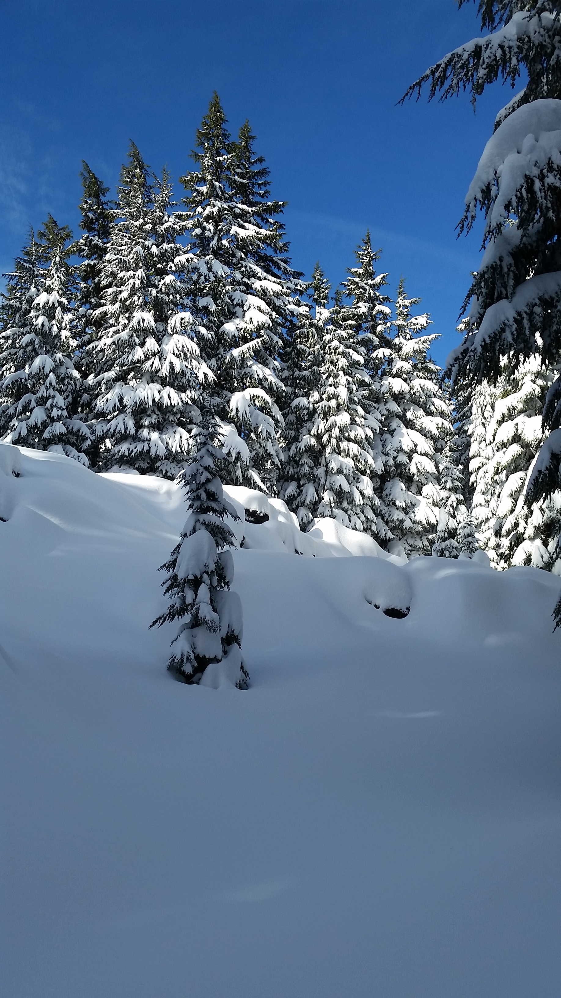 Snowy forest at Mt. Bachelor