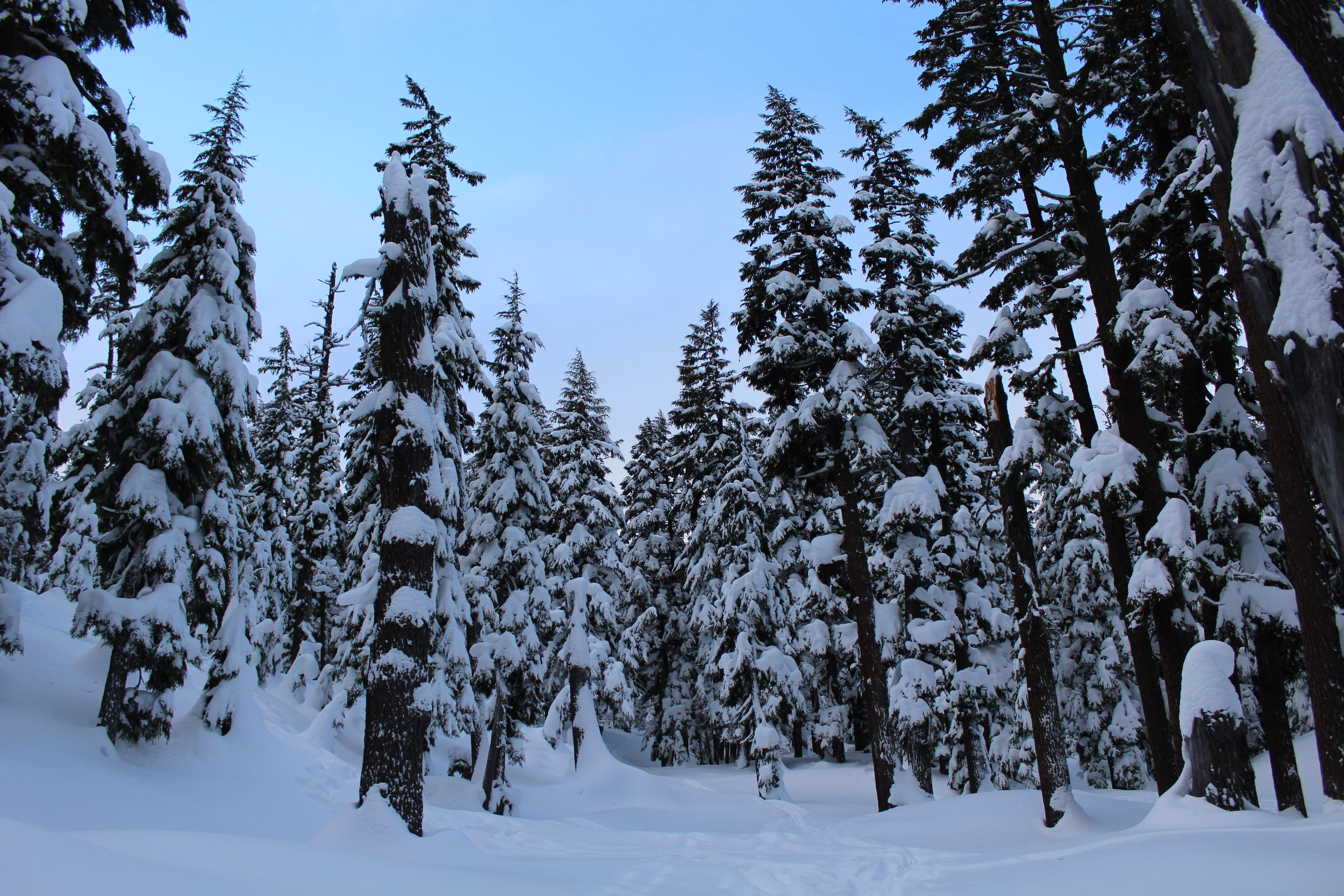 snowshoe through the forest