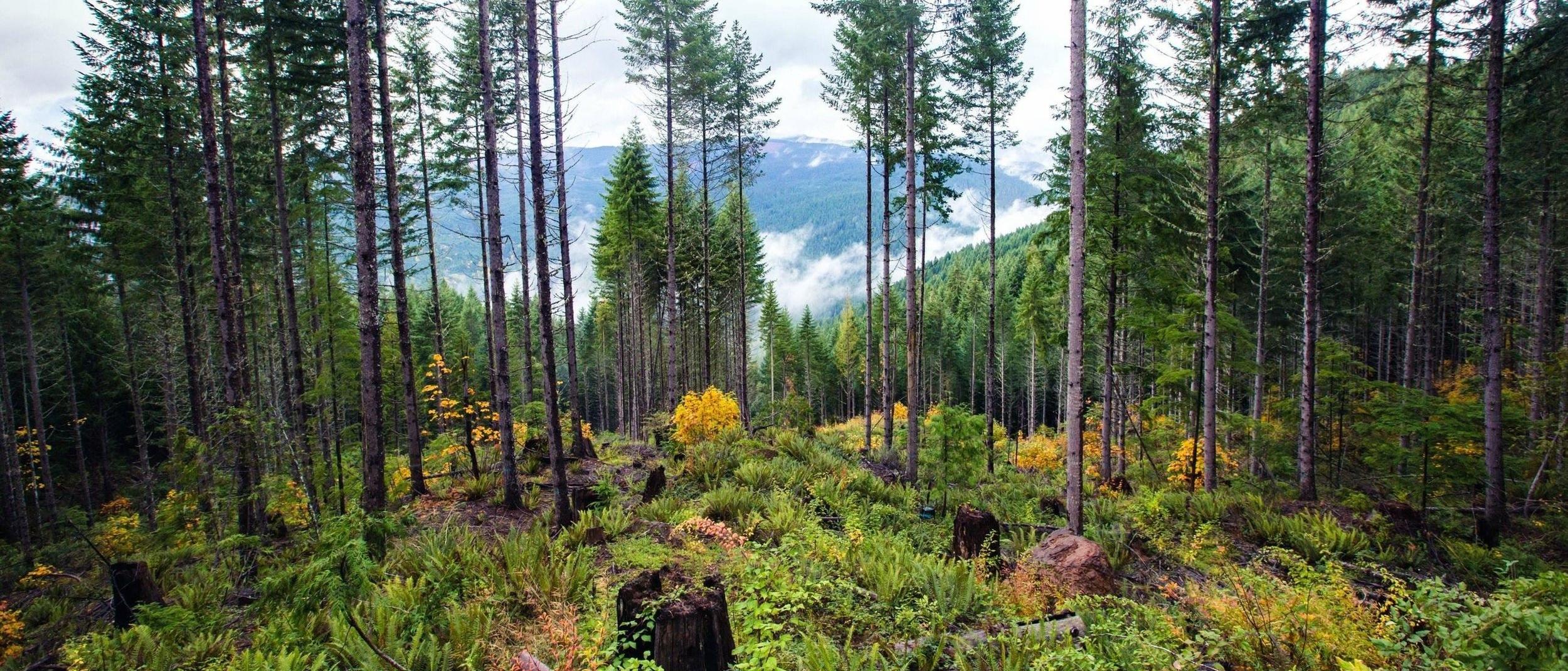 Umpqua National Forest. Photo by Justin Hartney.