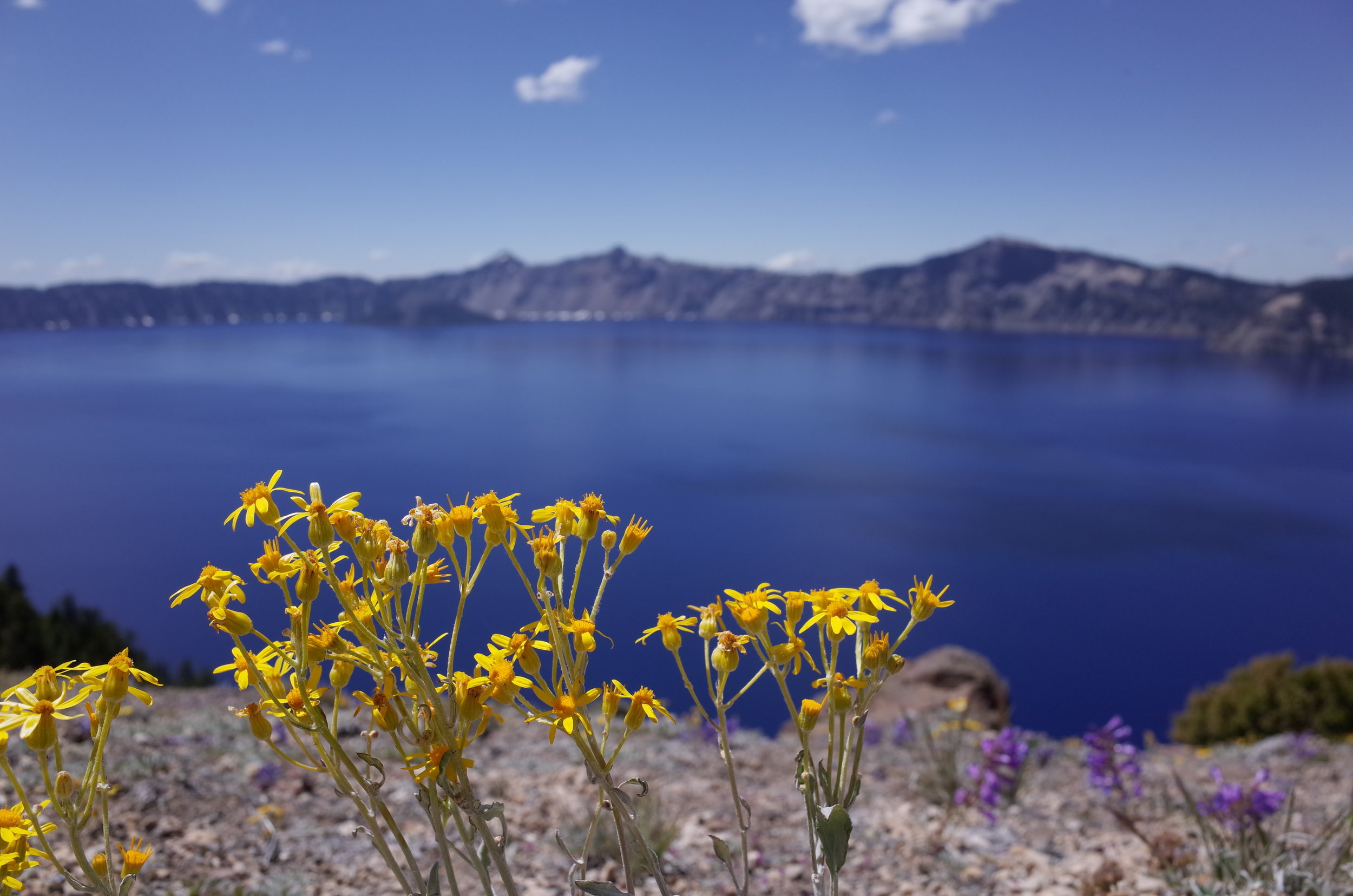 Crater Lake National Park - Oregon - Flowers