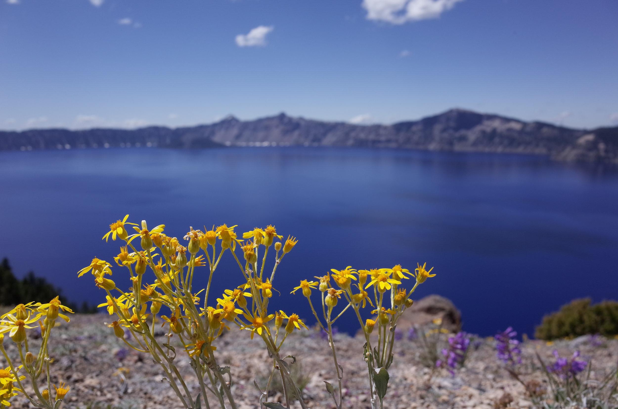 Crater Lake National Park - Oregon - Flowers - Wanderlust Tours