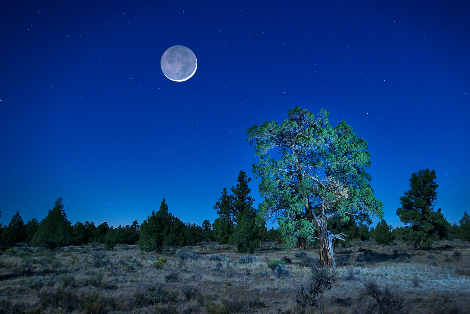 Badlands Wilderness, Juniper Desert at night ,Deschutes County,Oregon, USA