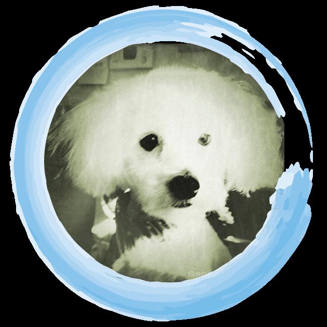 TinyEinstein-Circled.png