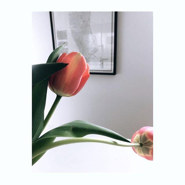 HAPPY FRIDAY! 🧡 En dissad lök i trädgården blev en beauty inne... Ta hand om varandra i helgen! ———————————————————————— #fridayflower