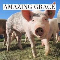 Amazing Grace.png