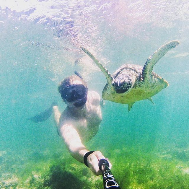 #selfie with a #turtle ? Don't mind if we do! 💙📸💙#mvmonsoon #portdouglas  #thisisqueensland #explorequeensland #portdouglasdaintree #portdouglaslife #portdouglasuncovered #reef #greatbarrierreef #cairns #privatecharter #snorkel #fish #dive