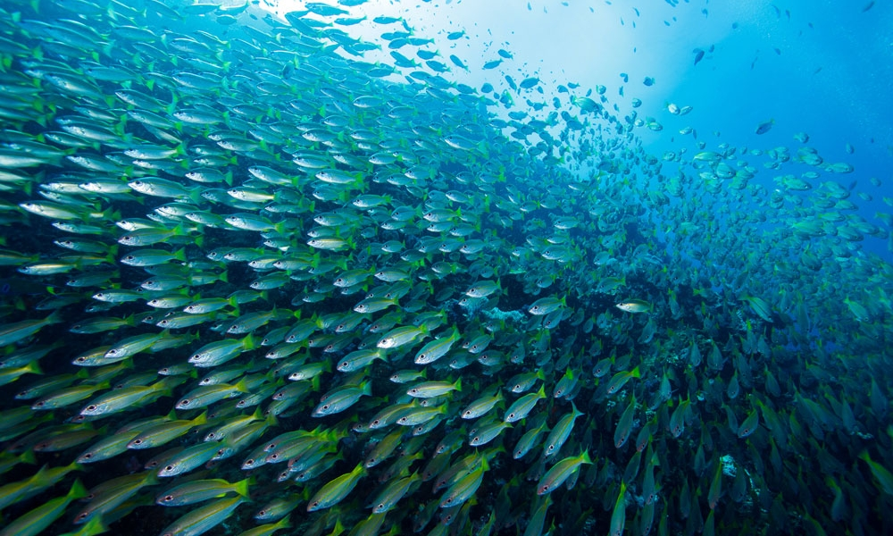 Large-School-fish.jpg